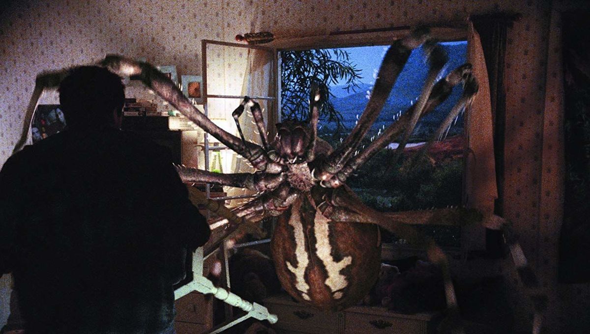 Common garden spider eats a bat in Texas