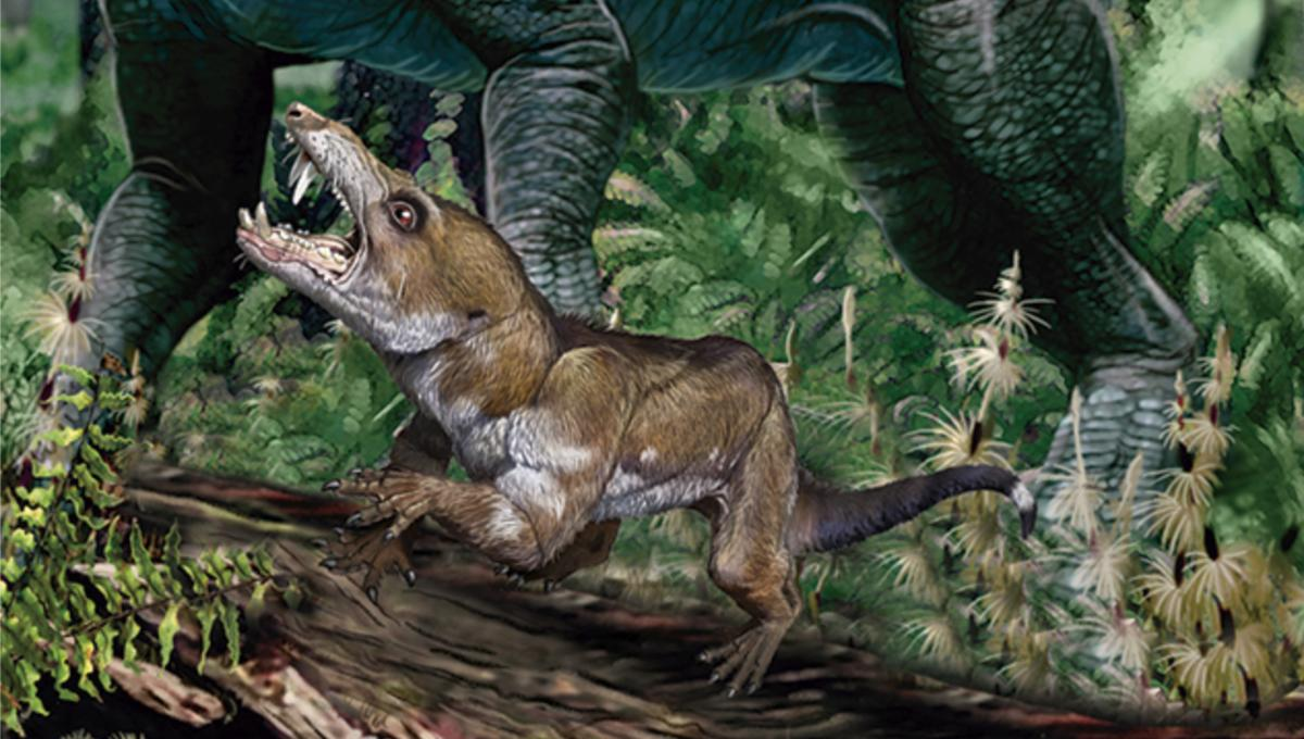 Hide your nuts! This saber-toothed Triassic squirrel seeks your snacks