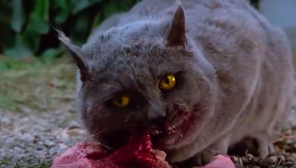 Feral cats ate corpses in a research facility, so we can all have nightmares now