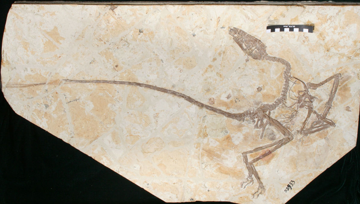 This new dinosaur just called it: even feathered dinos were nothing like birds