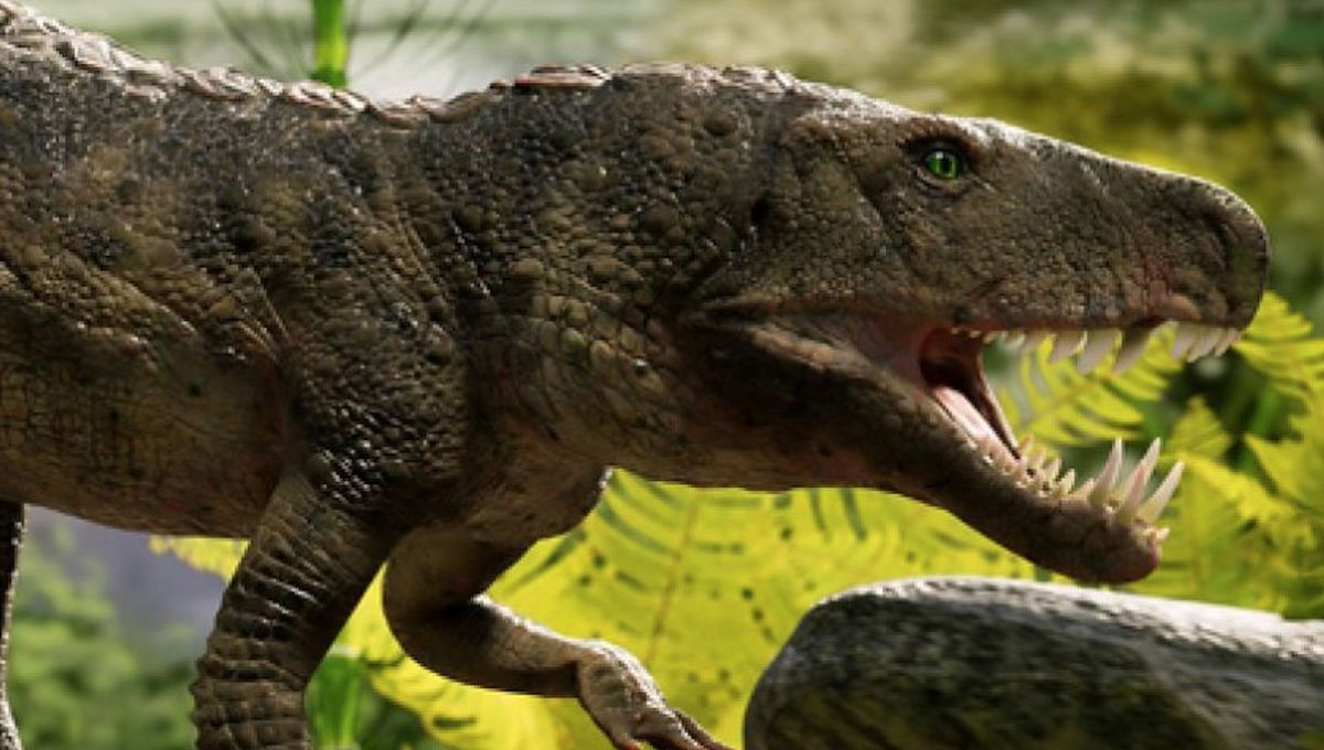 Bonecrushing prehistoric crocodile discovered in southern Brazil, dubbed 'T. Rex of its time'