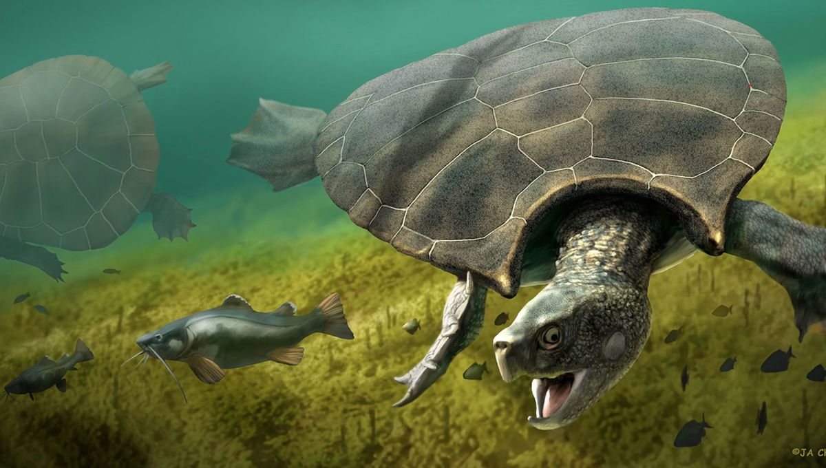 Check out the humongous horned shell on this rare prehistoric turtle