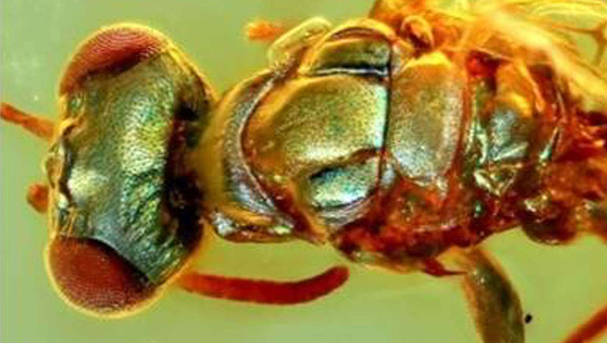 The preserved colors of 99-million-year-old bugs reveal prehistoric secrets of survival