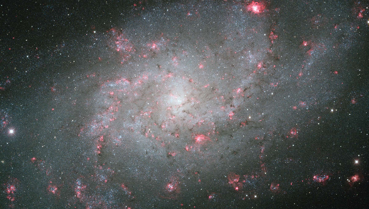 The magnificent nearby spiral galaxy M 33. Credit: KPNO, NOAO, AURA, Dr. Philip Massey (Lowell Obs.) - Image processing: Davide De Martin.