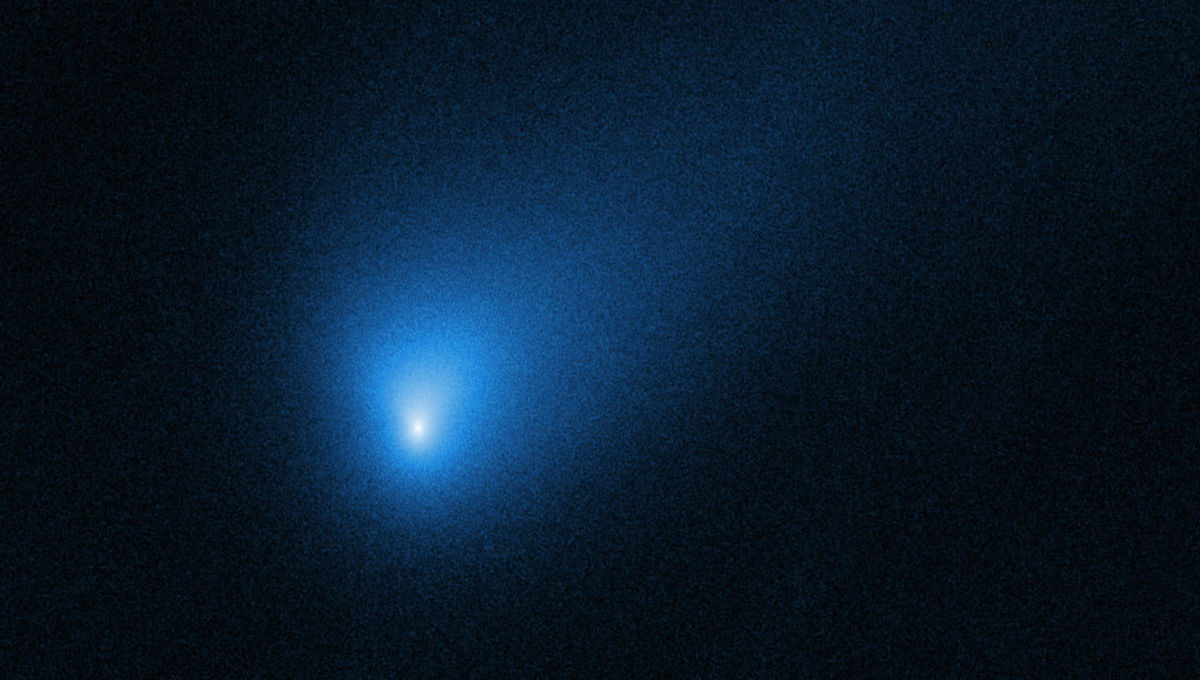 Hubble observes an alien visitor: the comet 2I/Borisov
