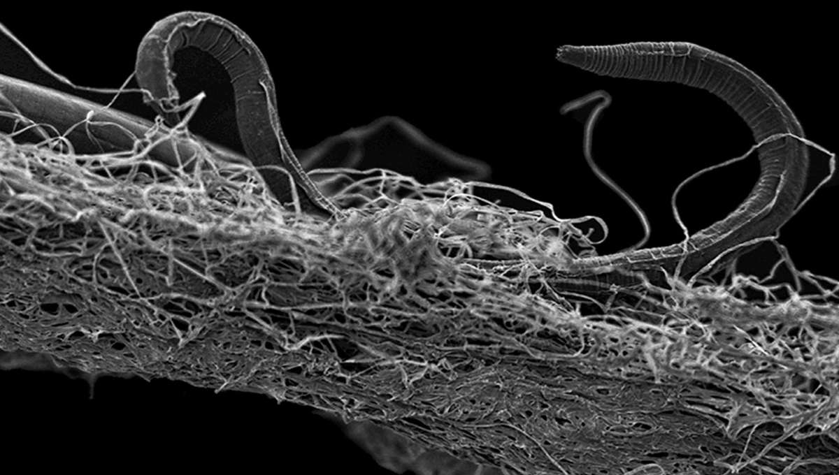 This worm can survive total cryogenic freezing…could that mean humans will someday?