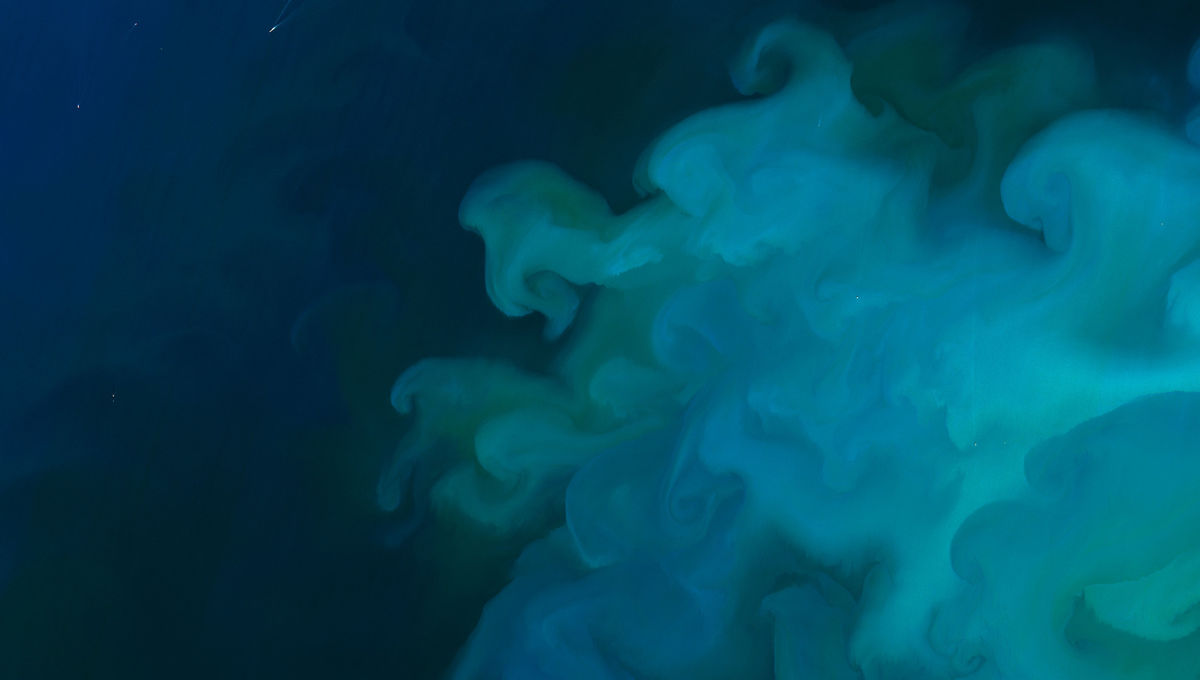 Phytoplankton blooms in the North Sea, seen by the Landsat-8 satellite in May 2018. Credit: NASA Earth Observatory / Joshua Stevens / USGS / LANCE/EOSDIS Rapid Response
