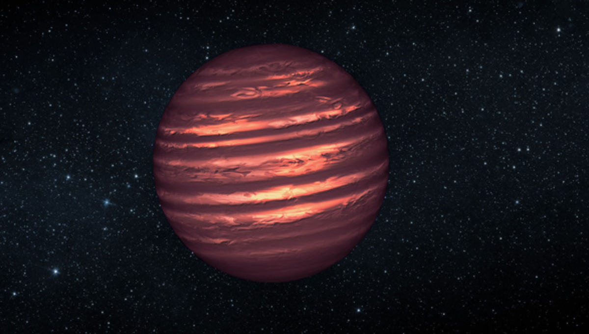 A very dense oasis in the brown dwarf desert
