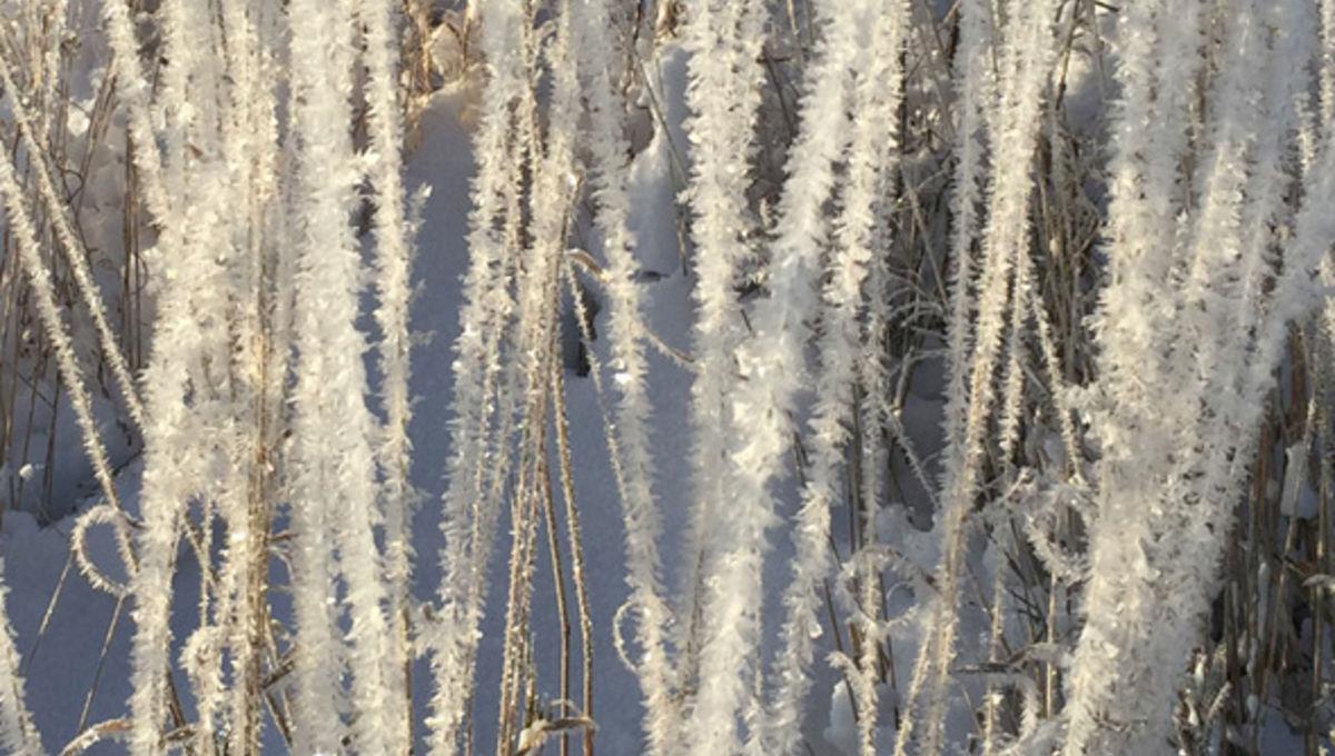 ice_grass_590_0.jpg