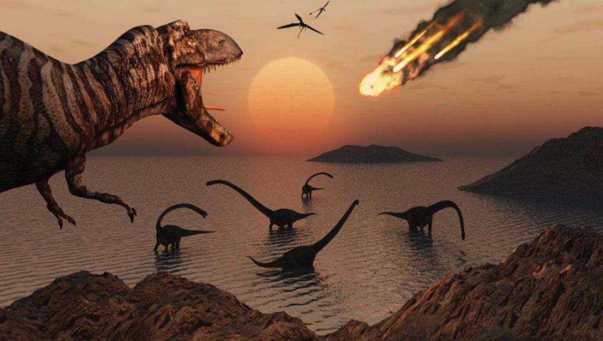 dinosaur-800x500.jpg