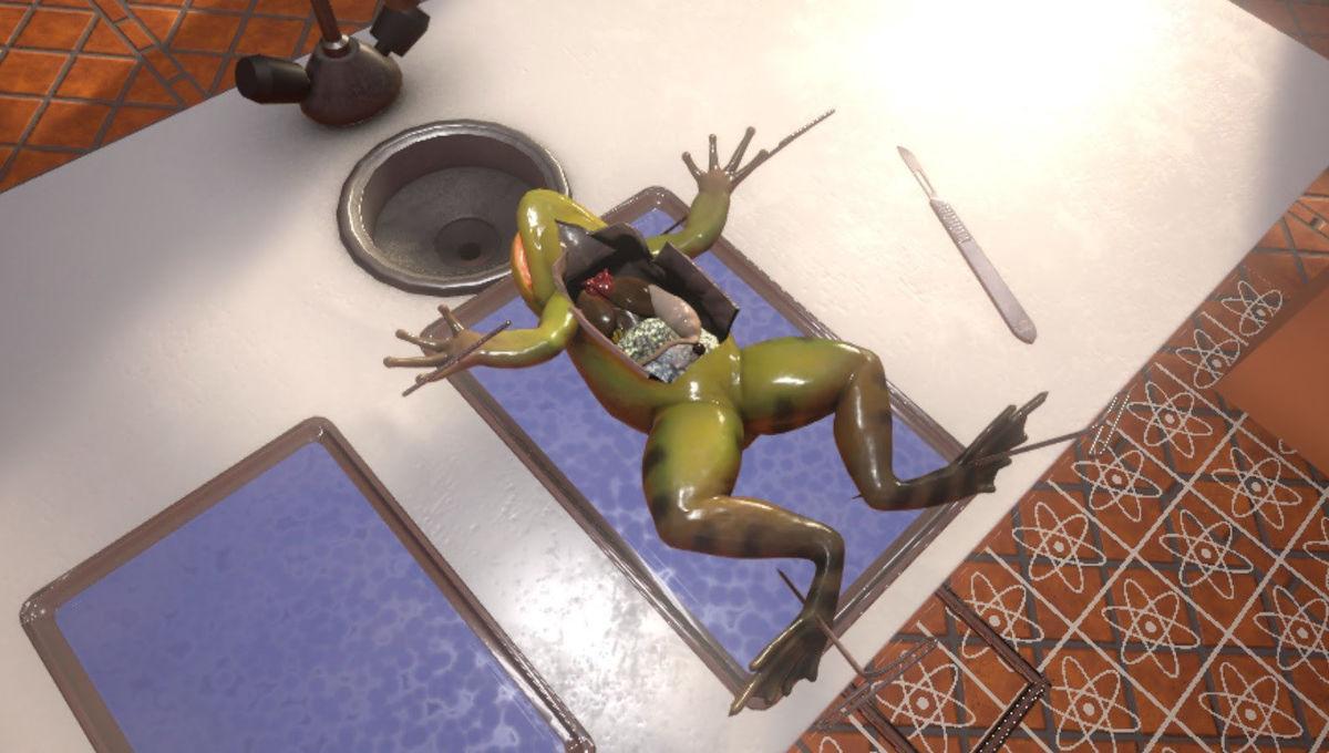 VR frog