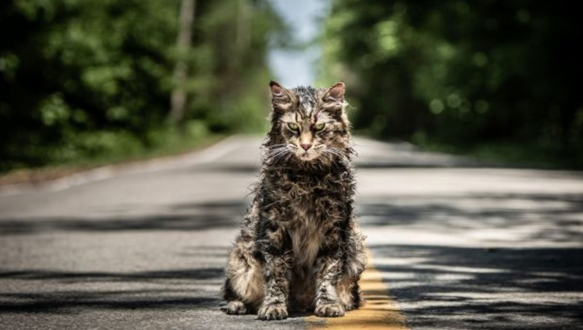 Pet Sematary cat, Church