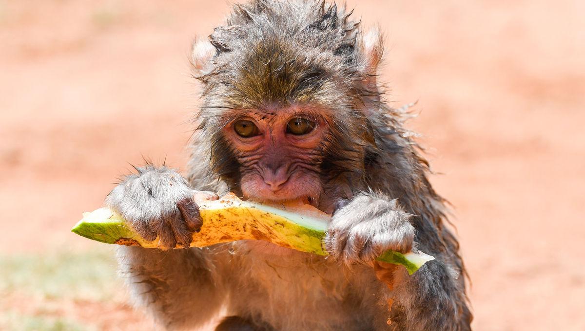 Getty Monkey