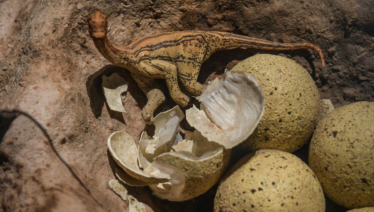 World's Biggest Dinosaur Exhibition In China's Guangzhou