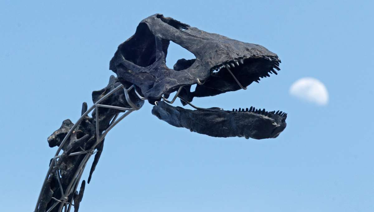 Skinny the dinosaur skeleton