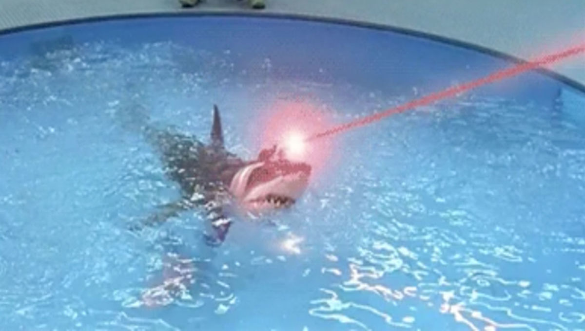 sharks with laser beams