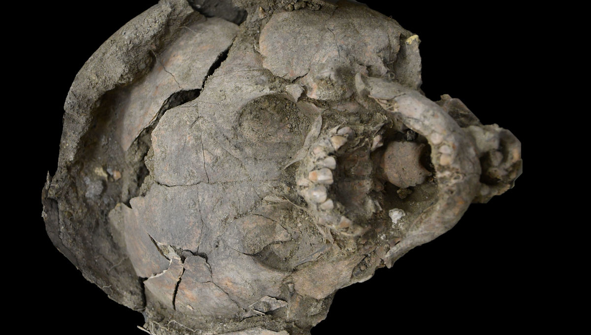 Unearthed burial skull of ancient Guangala culture