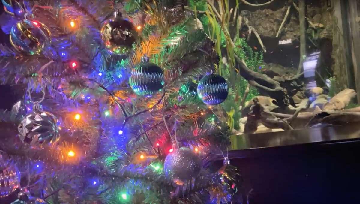 electric eel lighting up a Christmas tree