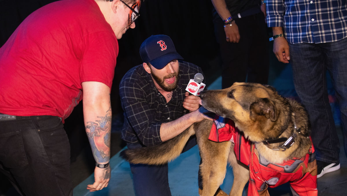 chris-evans-dog