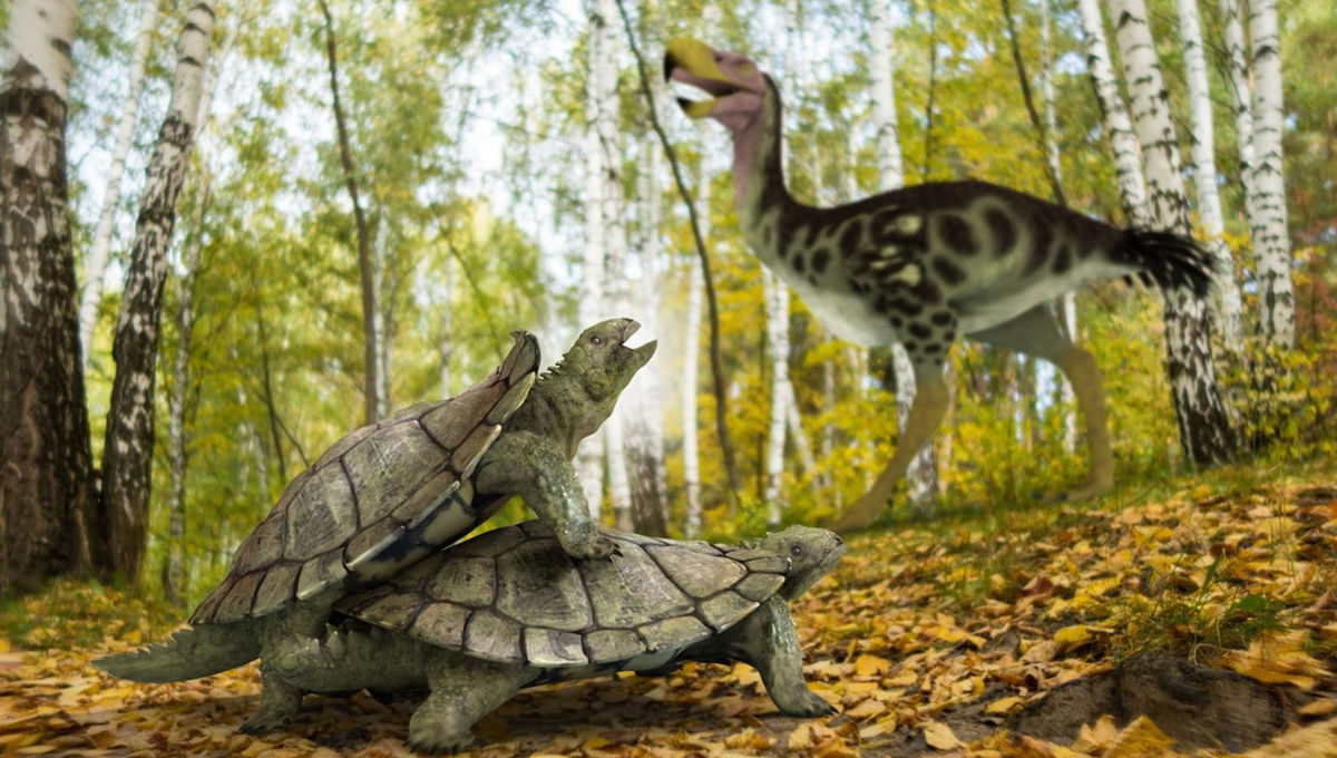 prehistoric turtle Laurasichersis relicta