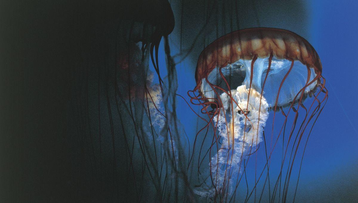 An underwater jellyfish