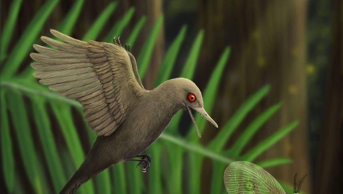 Dinosaur bird