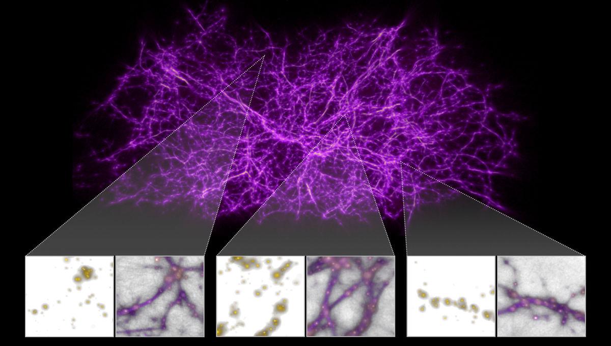 NASA image of slime mold simulation