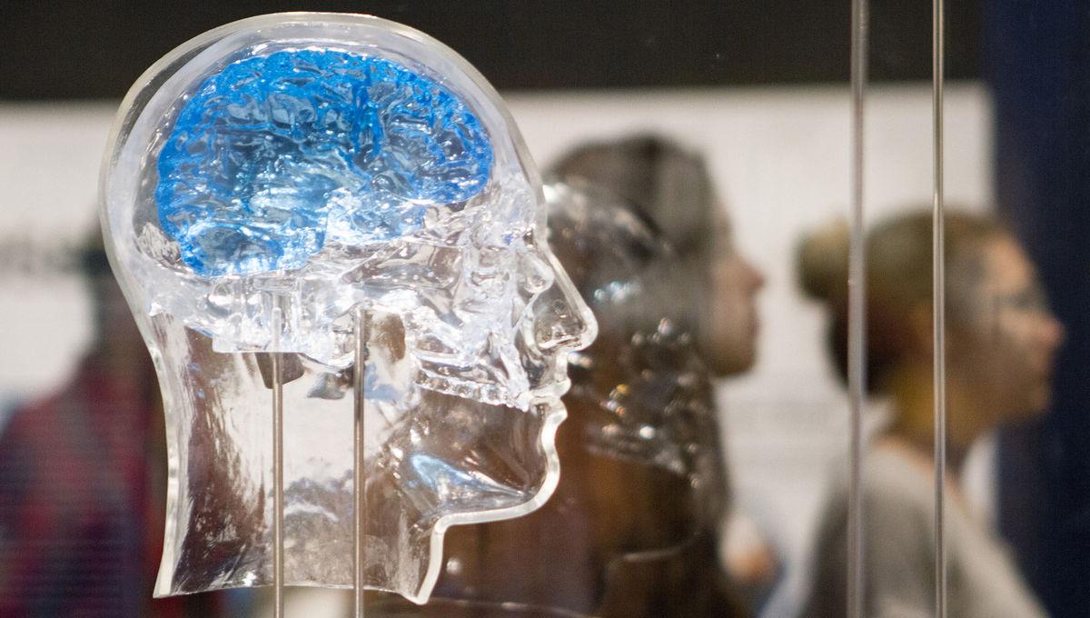 glass model of human brain