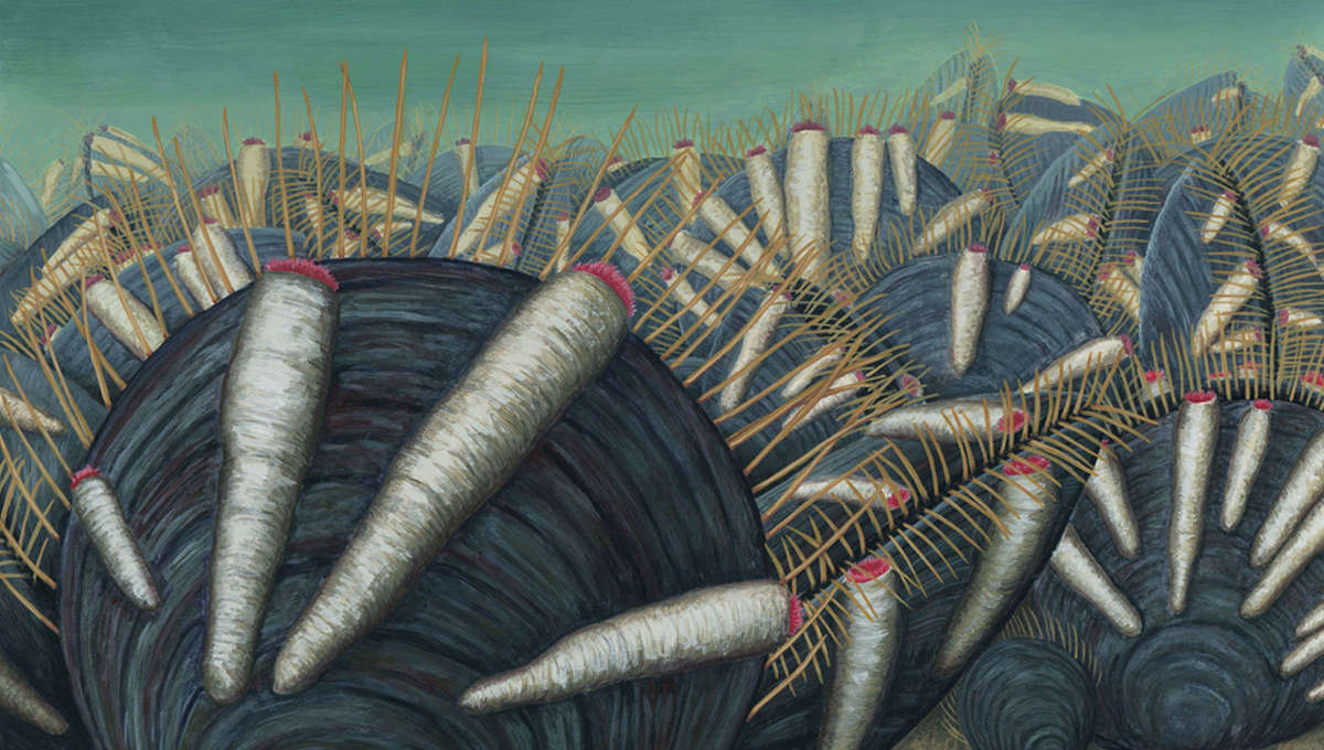 Cambrian bivalves and parasites