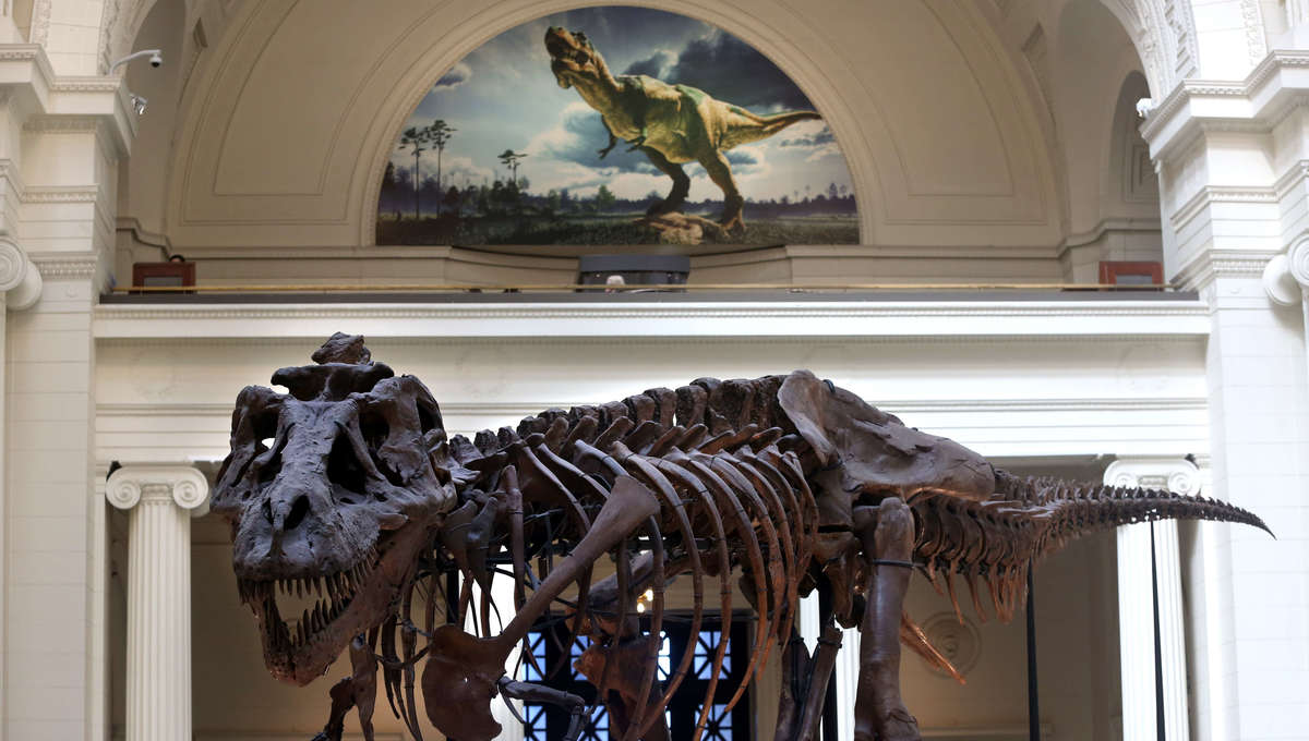 Sue the T-rex at the Chicago Field Museum
