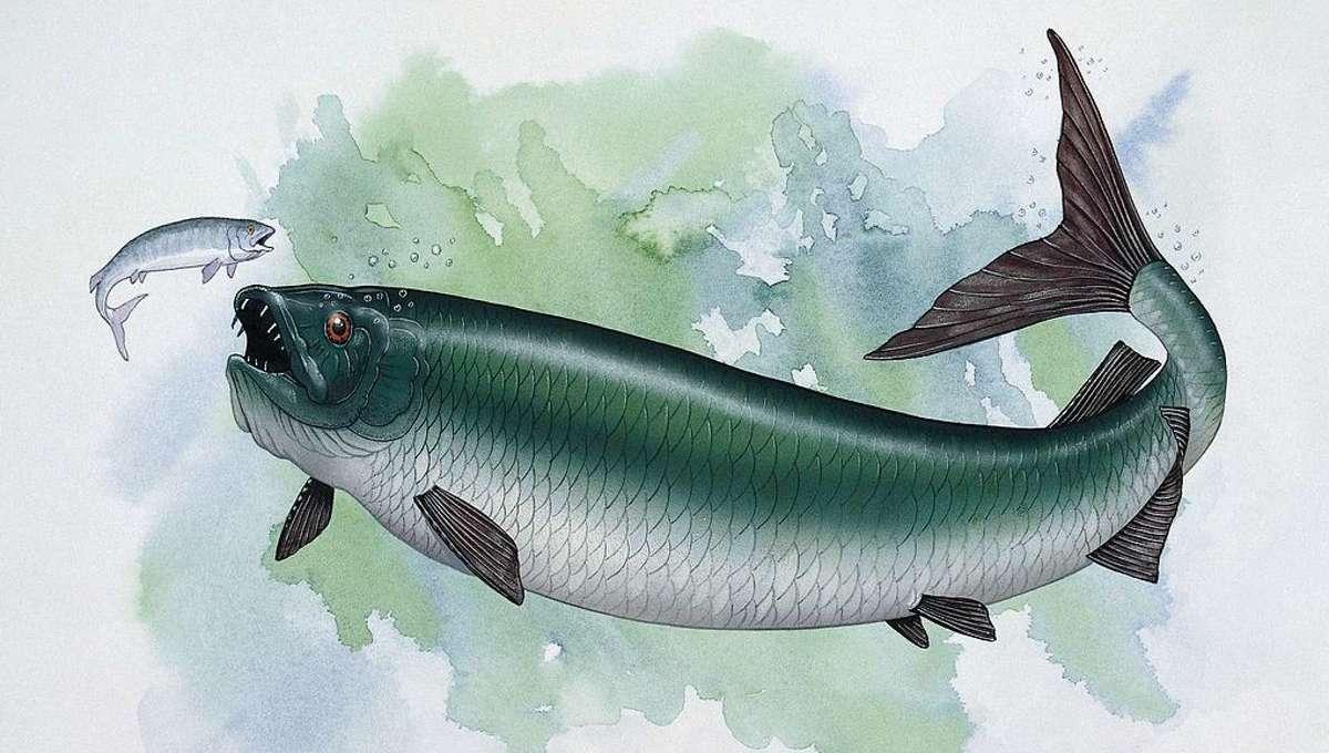 Giant Fish 2