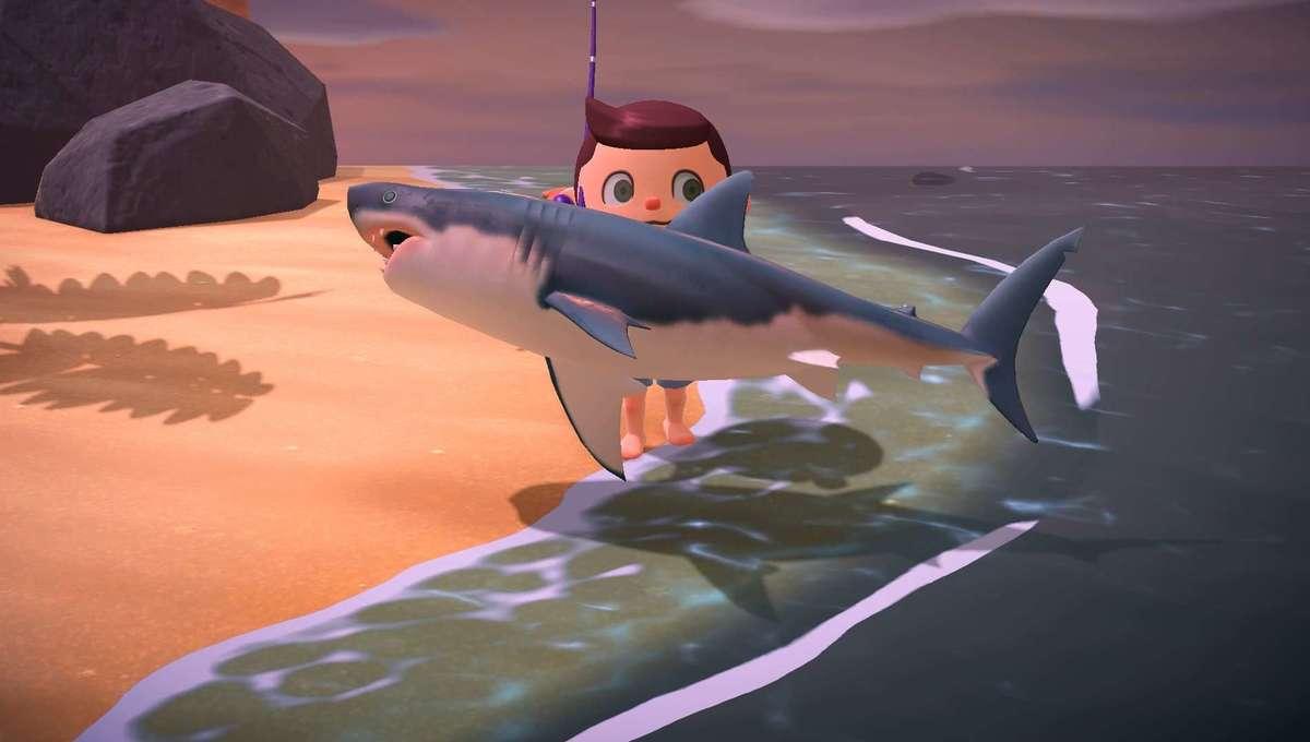 Great White Shark AC