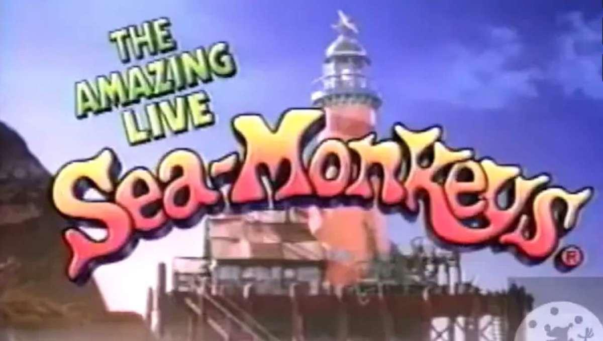 amazing-live-sea-monkeys