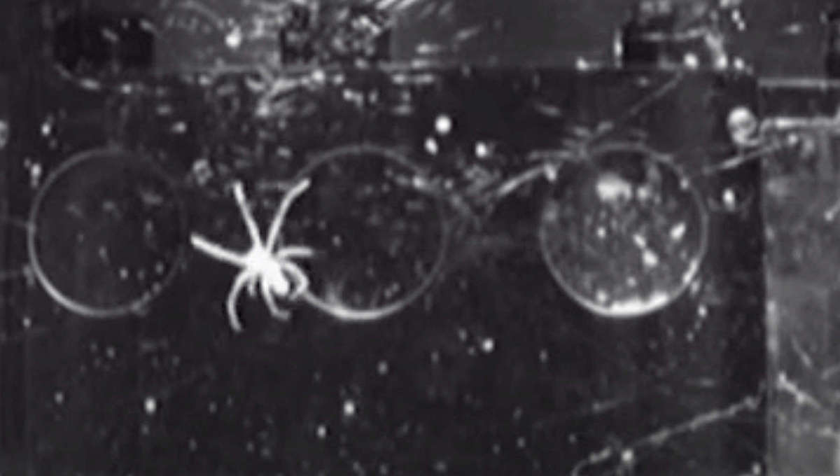 spider spinning its web in space