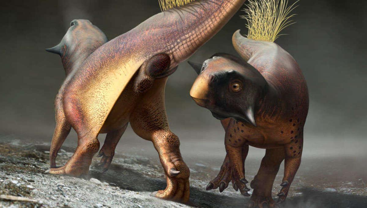 psittacosaur mating display