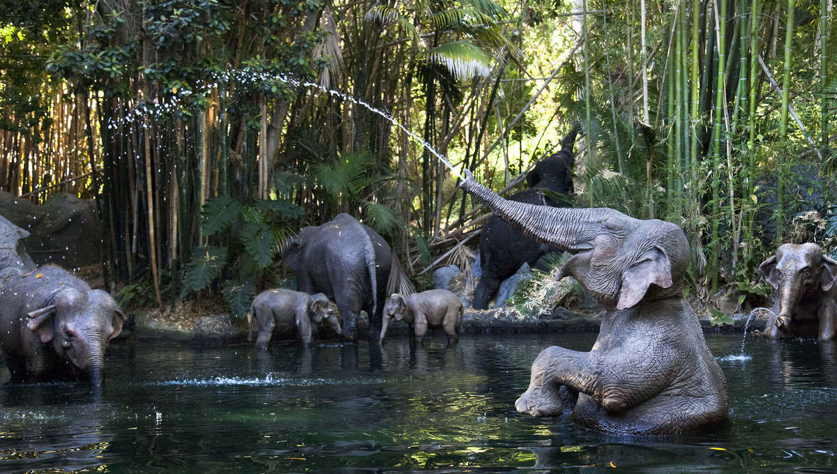 An elephant spouting water on Disney's Jungle Cruise