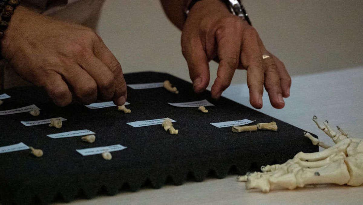 homo luzonensis bone fragments
