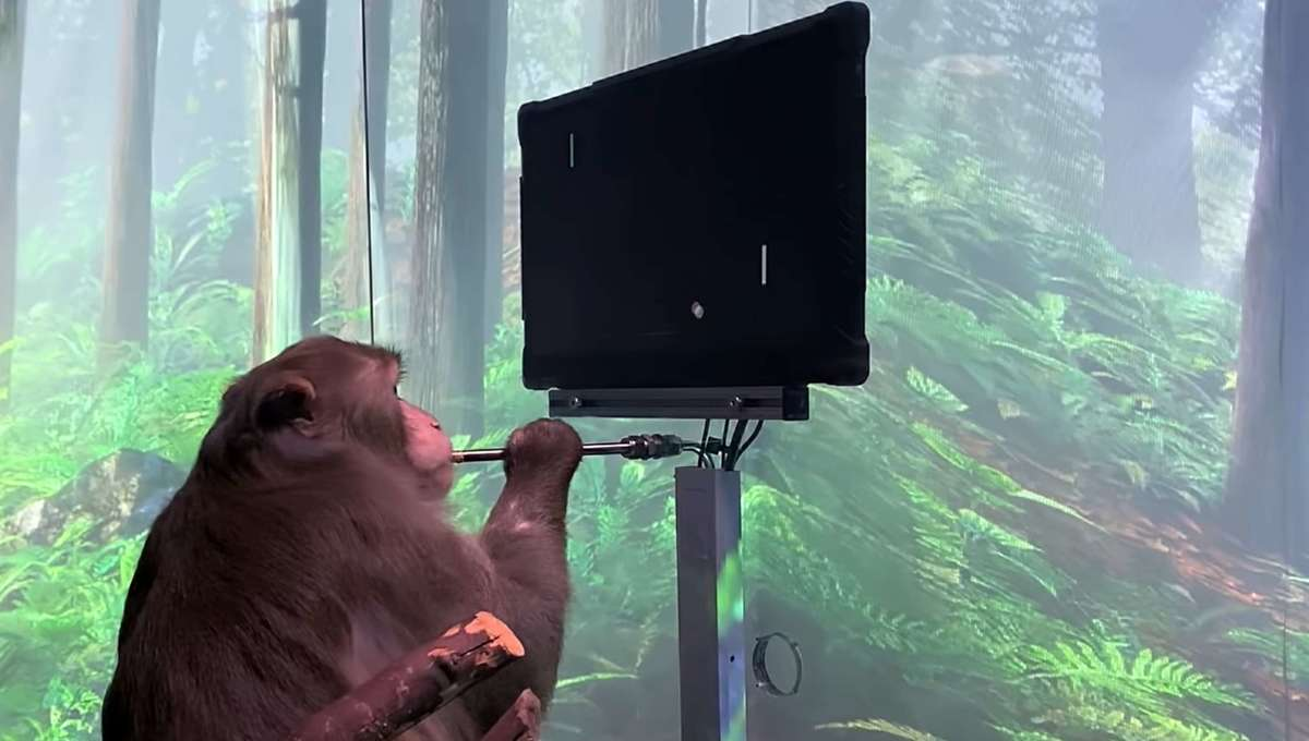 Neuralink Monkey playing Pong