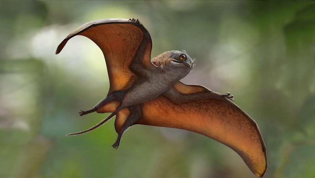 porgasaur