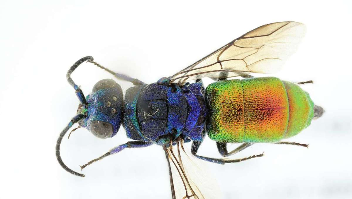 wasp hero