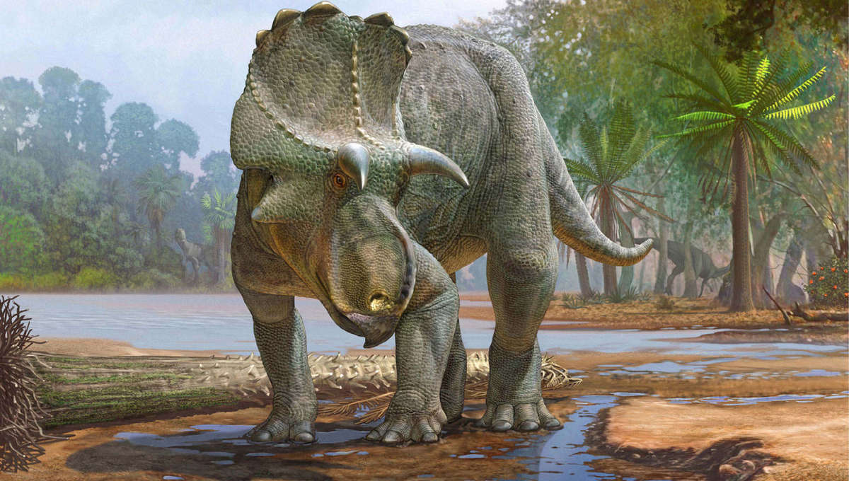 ceratopsid