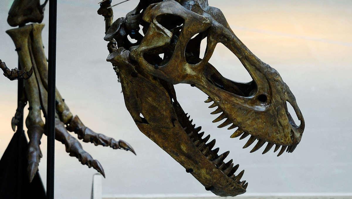 teenage T.rex