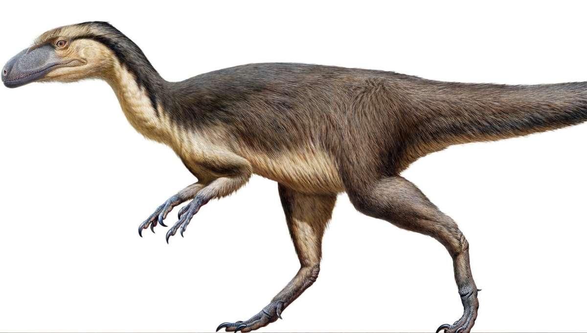 Dino Hero