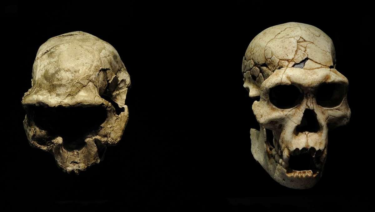 Liz Homo georgicus skull