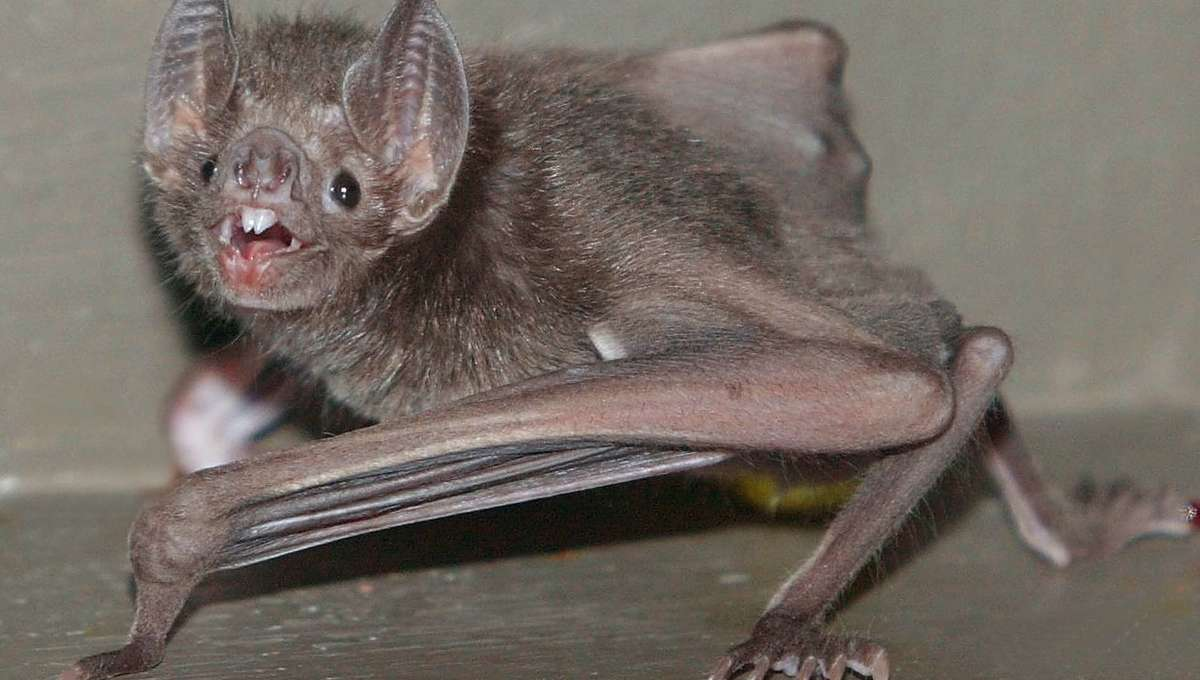 Liz bat