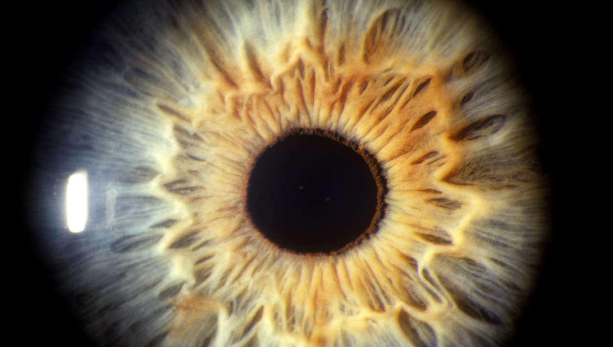 Liz Human Eye