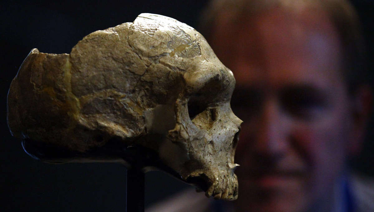 Liz Homo Erectus Skull