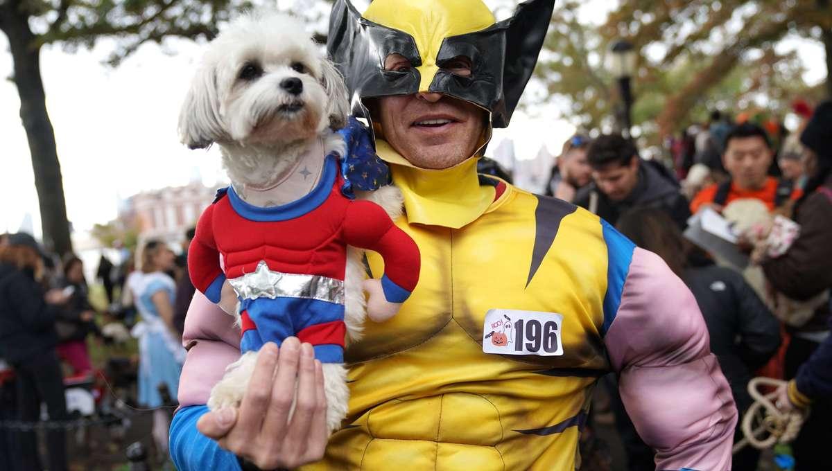 Halloween Dog 9