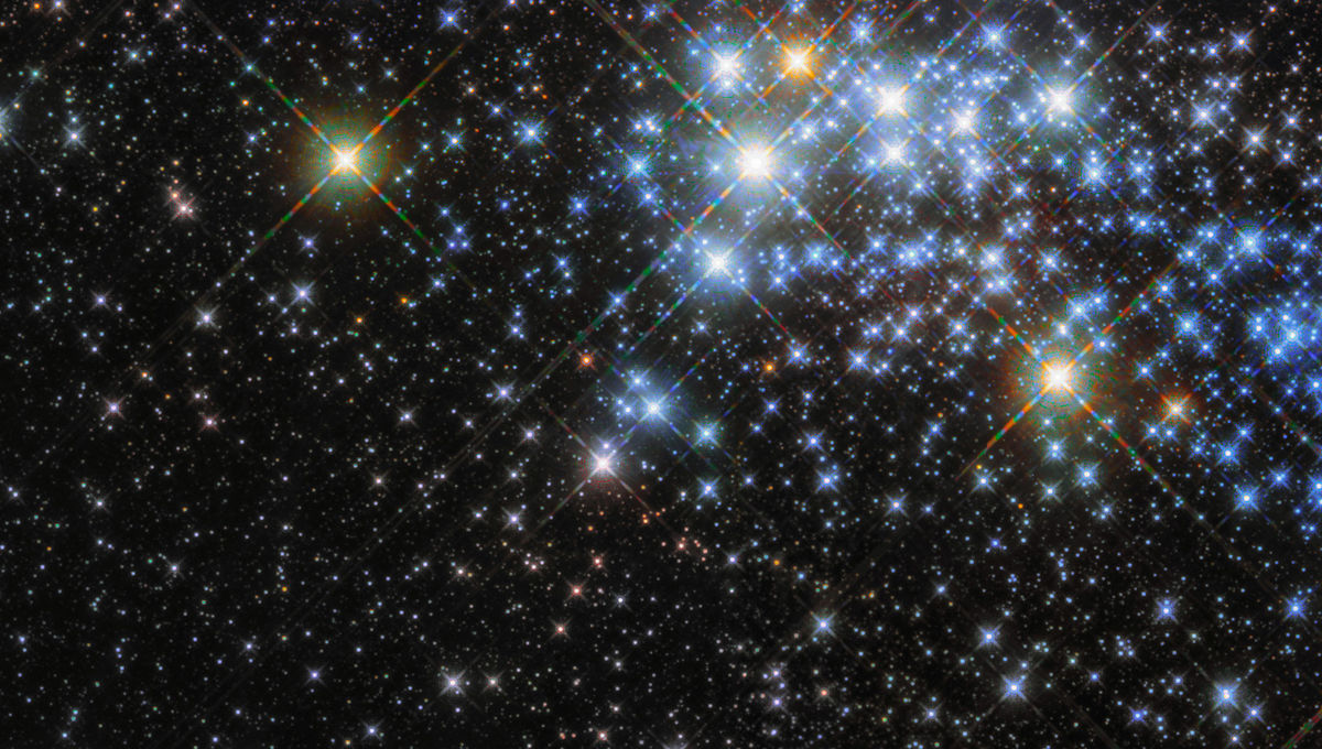 Hubble Space Telescope's infrared view of the gigantic star cluster Westerlund 1 reveals thousands of stars, many of which are intensely luminous. Credit: ESA/Hubble & NASA