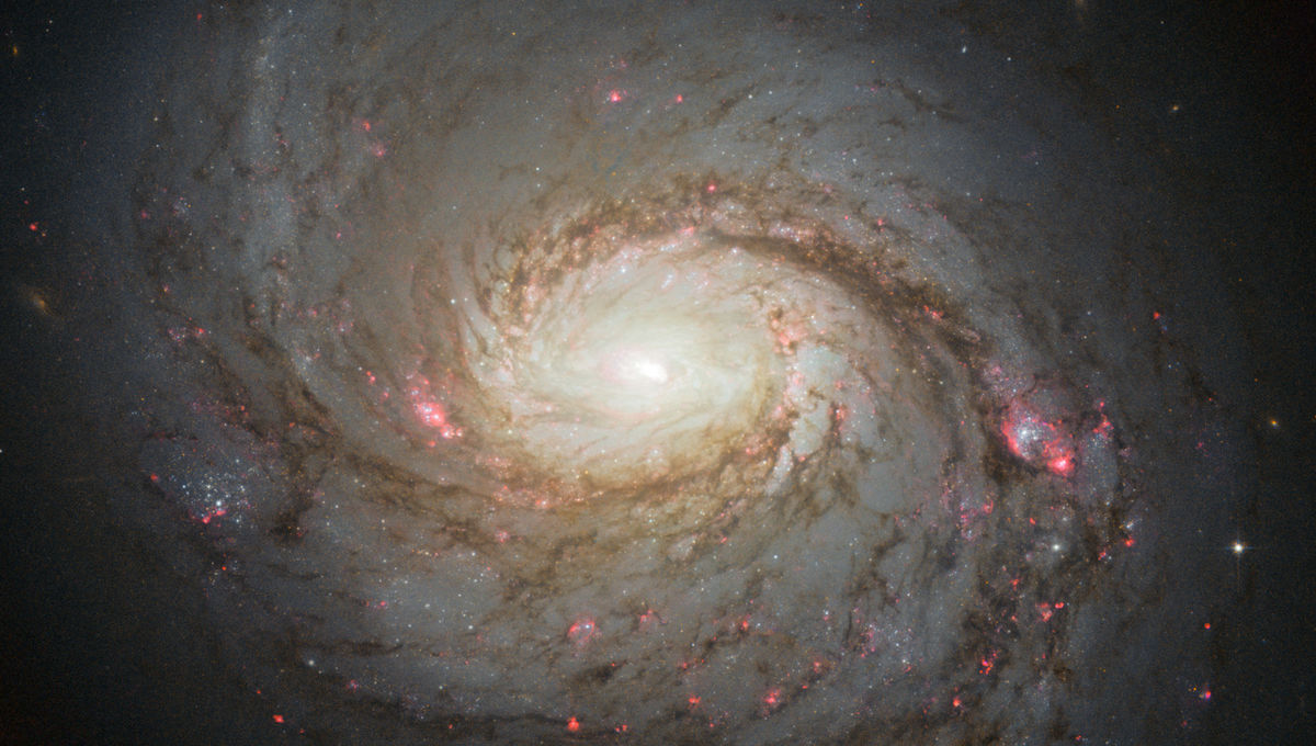 Hubble image of the magnificent spiral galaxy M 77. Credit: NASA, ESA & A. van der Hoeven